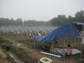 湖北温室大棚骨架建设图片