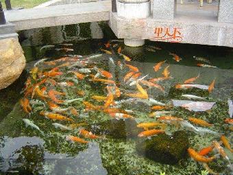 修建鱼池结构图