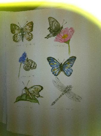 建筑,植物和动物等对象,运用铅笔,油画棒,水彩笔,色粉等工具进行绘画