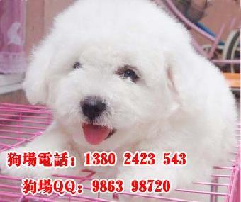 广州宠物市场 芳村花鸟鱼虫市场 广州宠物领养中心