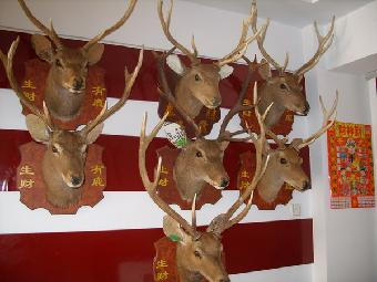 鹿头标本 欧式壁挂 壁炉装饰品