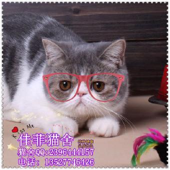 图片大全可爱要是小猫的真实的