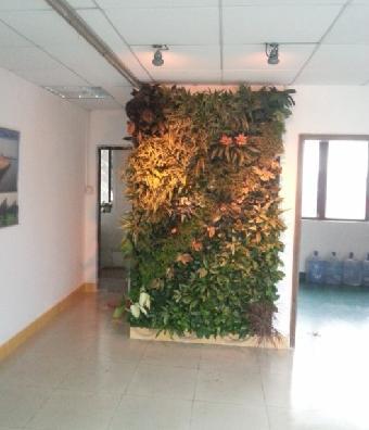 建筑,装饰 施工材料  购买植物墙去哪?认准我们金字塔.