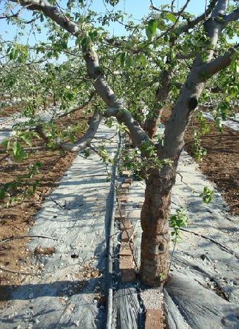 猕猴桃滴灌-山区果树滴灌价格