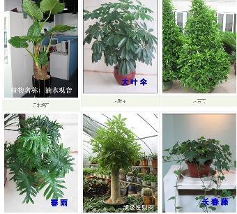 北京服务最好的绿植租赁公司