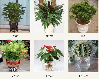 办公室盆栽办公室小型盆栽植物