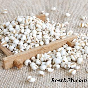 12. 白扁豆