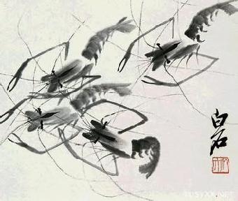 齐白石的虾画图片特征赏识