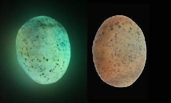 陨石夜明珠价格_夜明珠陨石拍卖价格鉴定鉴别。全球机械网和