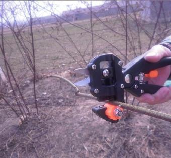 供应果树嫁接机 嫁接剪