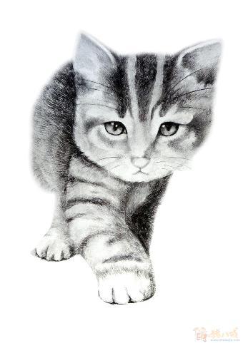壁纸 动物 猫 猫咪 素描 小猫 桌面 340_481 竖版 竖屏 手机